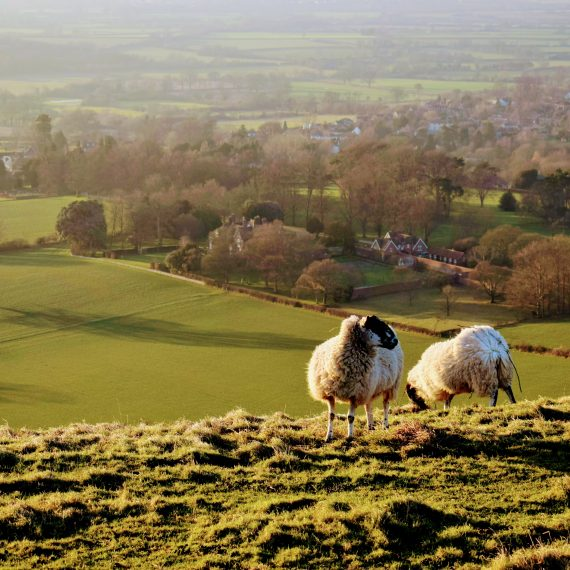 The view from Hambledon Hill